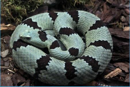 Snakes Jigsaw