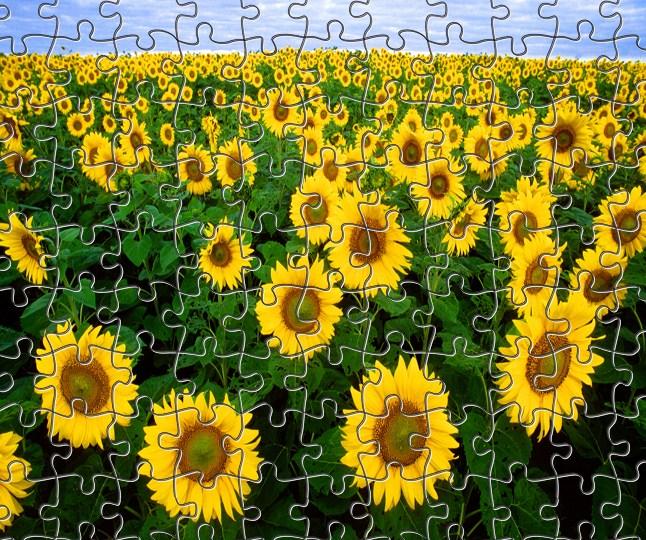 Sunflowers Jigsaw 2