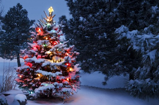 Snow Covered Christmas Tree Jigsaw Puzzle