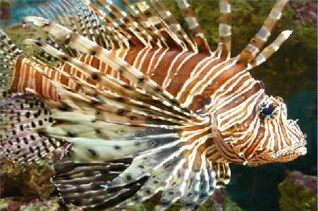 Great Fish Jigsaw