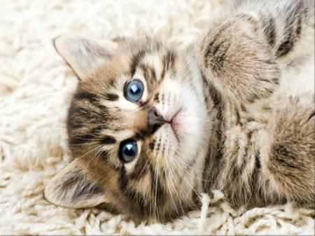 Sweet Kitten Jigsaw Puzzle