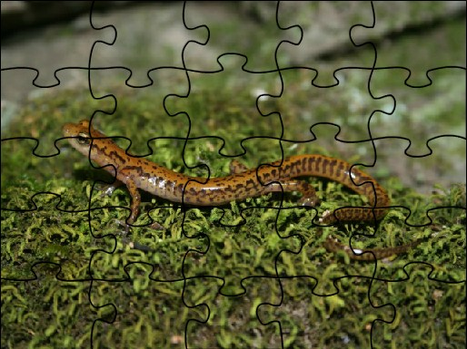 Long tail Salamander Jigsaw Puzzle