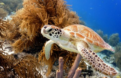 Green Sea Turtle Jigsaw Puzzle