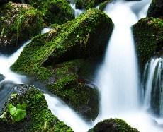 Stream And Moss