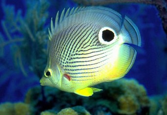 Aquarium Fish Jigsaw