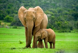 Elephant Mom And Baby Jigsaw Puzzle