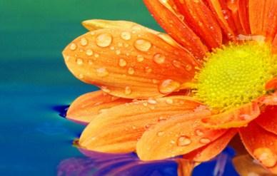 Orange Flower Jigsaw Puzzle