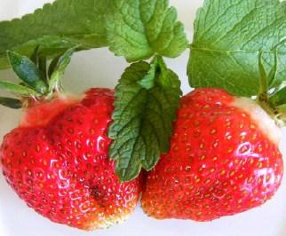 Desenhos de Strawberries para colorir