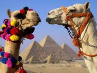 Camels jigsaw