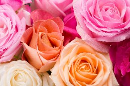 Assorted Roses Jigsaw Puzzle