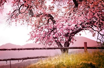 Blossoming Spring Tree Jigsaw Puzzle