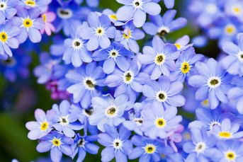 Blue Spring Flowers Jigsaw Puzzle