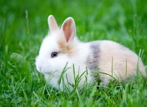 Little Rabbit Jigsaw