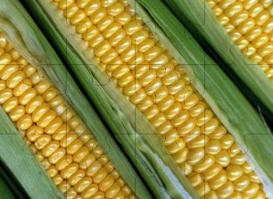Desenhos de Corn Jigsaw Puzzle para colorir