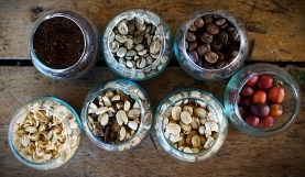 Coffee Bean Samples Jigsaw Puzzle