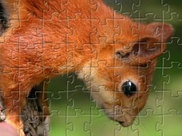 Squirrel Jigsaw