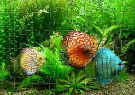 Tropical Fish Jigsaw
