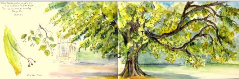 Lime Tree Jigsaw Puzzle
