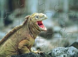 Reptile Jigsaw