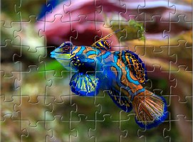Aquarium Fish Jigsaw 2