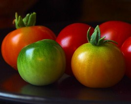 Colorful Tomatoes