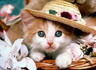 FANCY CAT JIGSAW
