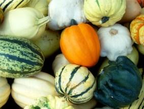 Autumn Harvest Jigsaw