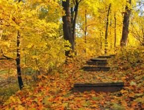 Autumn Stairway Jigsaw
