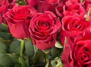 Red Roses Jigsaw