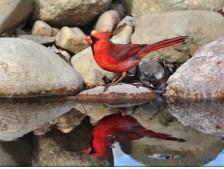 Cardinal Reflection