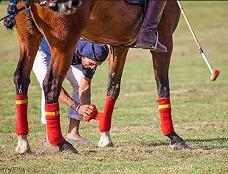 Horse Leg Wraps Jigsaw Puzzle
