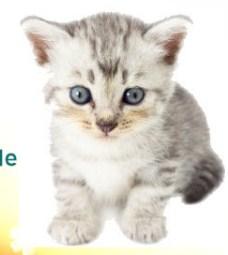 Little Kitty Sasha