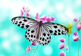 Rice Paper Butterfly Jigsaw Puzzle