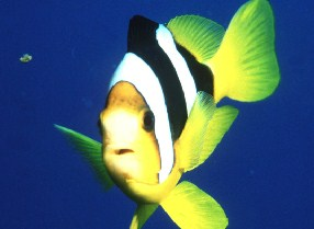 Tropical Fish Jigsaw 2