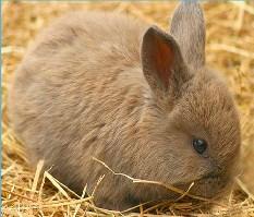 Cute Bunny Jigsaw