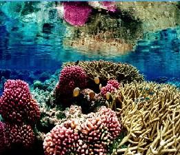 Coral Reef Jigsaw