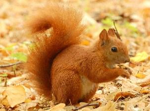 Squirrel Jigsaw 2