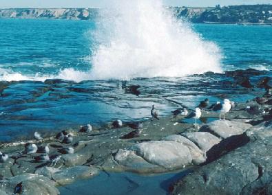 Seagull Jigsaw