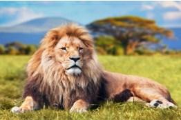 Big Lion Jigsaw Puzzle