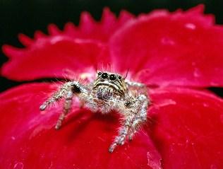 Spider Jigsaw
