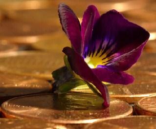 Penny Flower