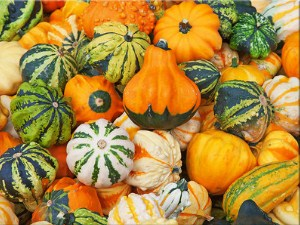 Colorful Gourds Jigsaw Puzzle