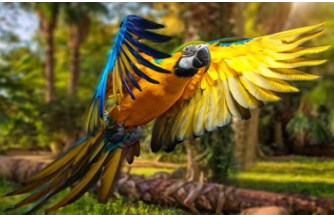 Flying Macaw Jigsaw Puzzle