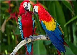 Cute Parrots Jigsaw