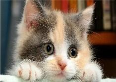 Cat Photo Jigsaw