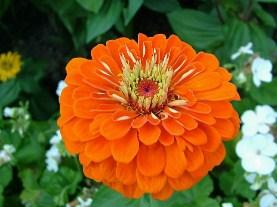 Orange coloured flower