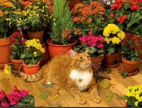 Flower Shop Cat