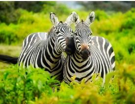 Two Cute Zebras Jigsaw Puzzle