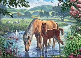 Steve crisp pony and foal jigsaw puzzle