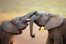 Elephant Greeting Jigsaw Puzzle